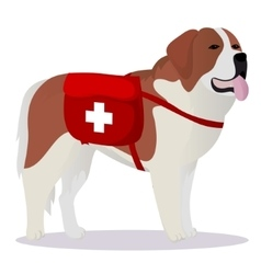 St bernard dog lifesaver vector