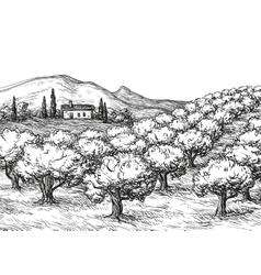 Olive grove landscape vector image