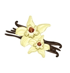 Vanilla sticks with a flower on white background vector