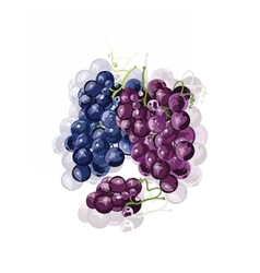 Red Grapes isolated vector image vector image