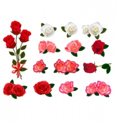 Roses graphics vector