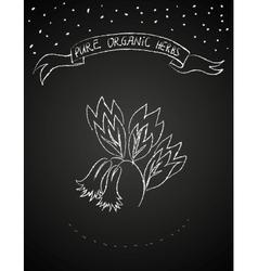 Chalk flower on blackboard vector image