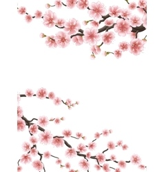 Spring background with cherry blossom eps 10 vector