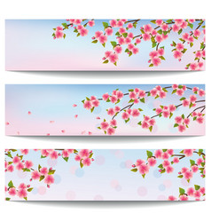 Set of banners with japanese sakura cherry tree vector image