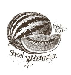 Watermelon logo design template fruit or vector