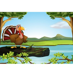 A turkey in the river vector