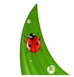 Ladybird On Grass vector image vector image