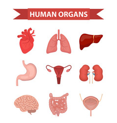 internal organs of the human icons set flat style vector image