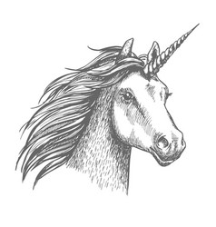 unicorn sketch isolated head vector image vector image
