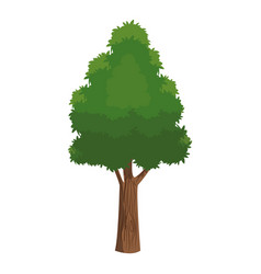 Tree foliage leafy natural over white background vector