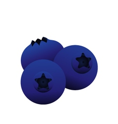 Blue berry vector
