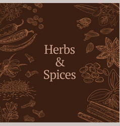sketch herbs and spices template vector image