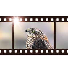 Photo film with hawk predatory bird vector