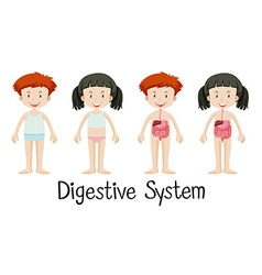Boy and girl with digestive system vector