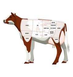 caw steak parts beef cattle parted into vector image
