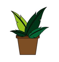 Plant in pot vector