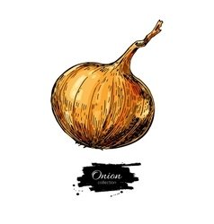 Yellow onion hand drawn vector