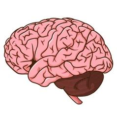 Human brain cartoon vector