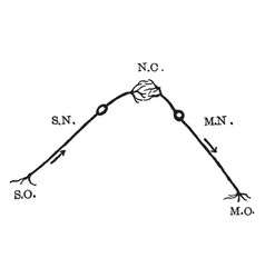 Nerve reflex arc vintage vector