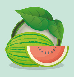 watermelon and leaves natural vector image