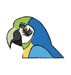 Macaw amazon bird brazil wildlife image vector