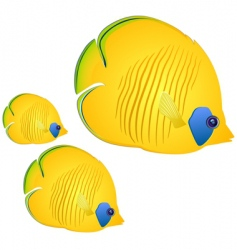 butterfly fish vector image