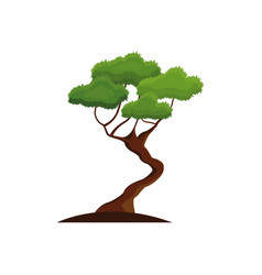 Bonsay tree oriental season nature branch vector