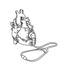 human heart with stethoscope vector image