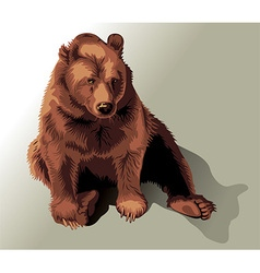 Drawing of a sitting bear vector