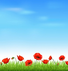 Poppy field vector