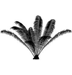 Palm Silhouette vector image vector image