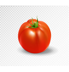Red tomato realistic vector