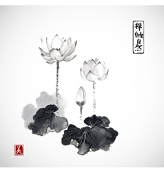 Lotus flowers hand drawn with ink vector