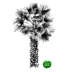 hand drawn palm tree vector image vector image