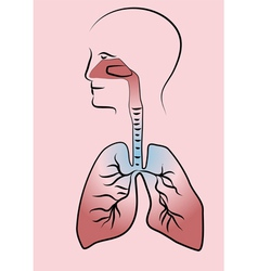 Respiratory system vector