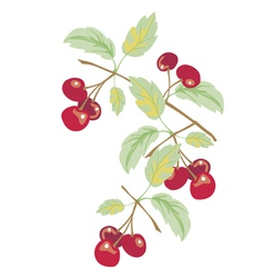 Cherries vector
