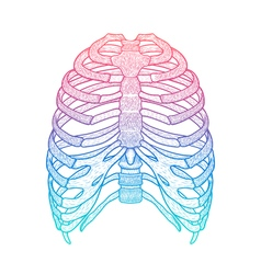 human rib cage Line art style Boho vector image