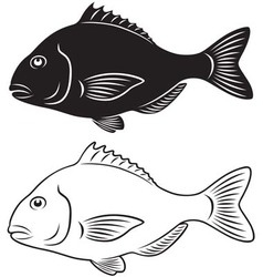 seabass vector image vector image