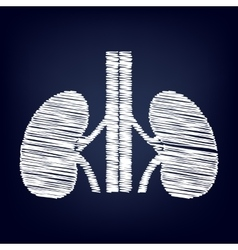 Human kidneys sign vector