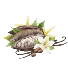 Watercolor cocoa fruit and vanilla flowers vector