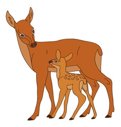 Deer With Baby vector image