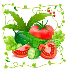 Still life of tomatoes and cucumbers vector image