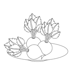 Fresh beets vegetables vector