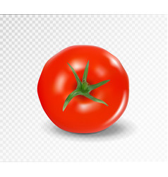 Tomato top side realistic red tomato vector