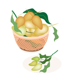 A Brown Basket of Sweet Mango Fruits vector image