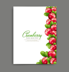 Lliustration with realistic cranberries isolated vector