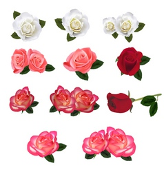 Set of a beautiful roses vector