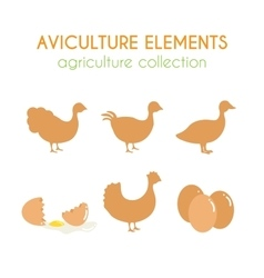 Aviculture set poultry industry vector