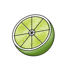 Draw slice lemon citrus fruit fresh vector