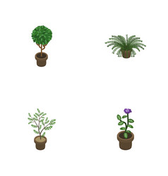 Isometric houseplant set of fern plant flower vector
